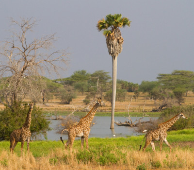 Tanzania rich of hunting species