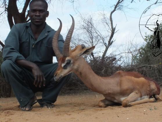 gerenuk-hunting2 Tanzania