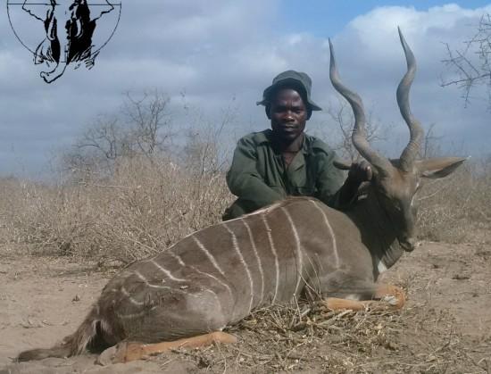 lesser-kudu-hunting Tanzania