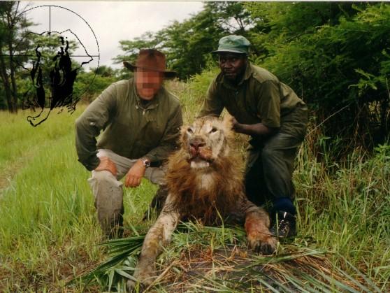 Lion trophy Tanzania